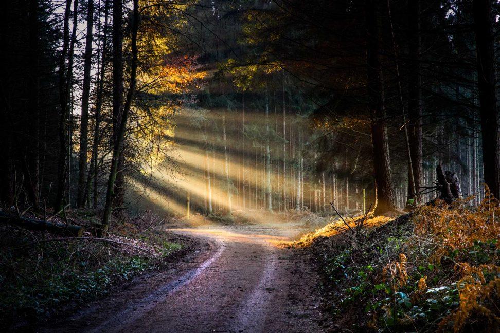 Wandbild Sonnenstrahlen im Wald bei Ransbach-Baumbach.
